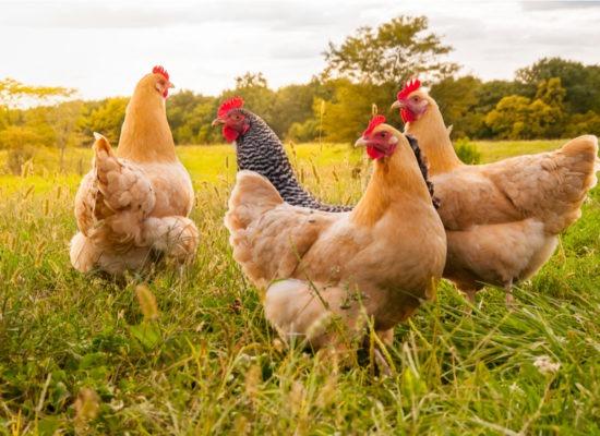 Coronavirus negative impact on Agriculture sector
